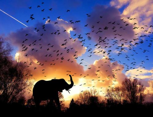Like a Fly on an Elephant's Back