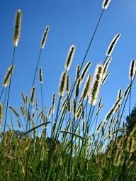 grass-against-blue-sky